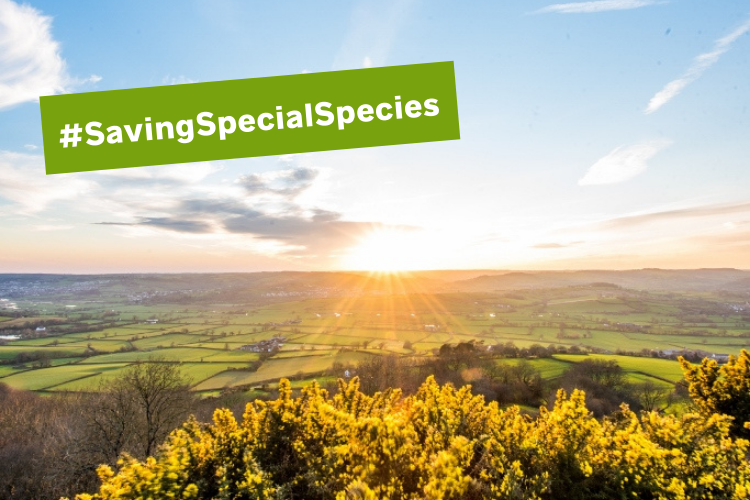 #SavingSpecialSpecies – protecting endangered species