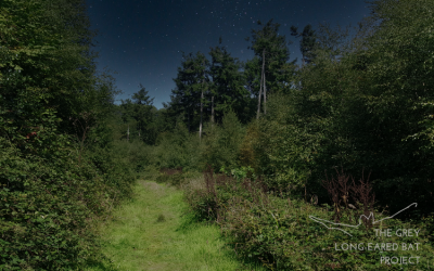 Bat walk – Holyford Woods