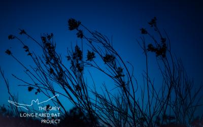 Bat walk – Hogchester Meadows